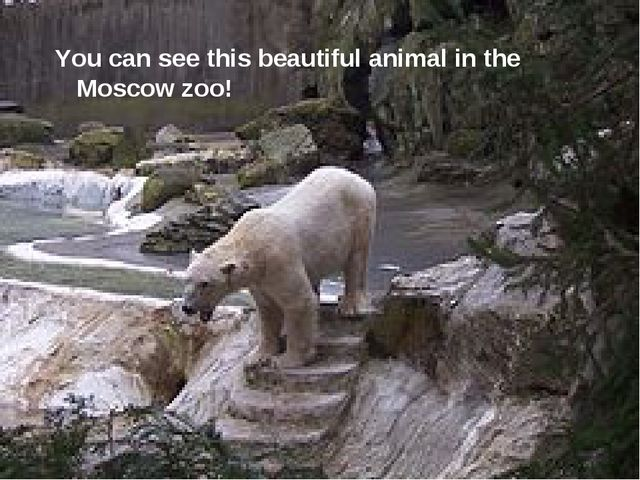 You can see this beautiful animal in the Moscow zoo!