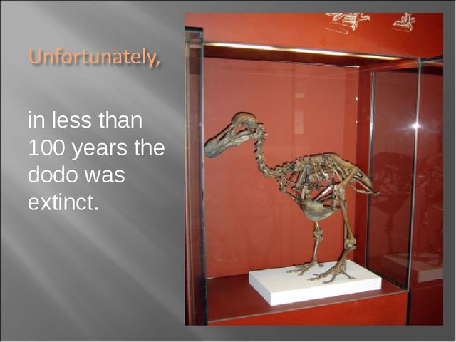 in less than 100 years the dodo was extinct.