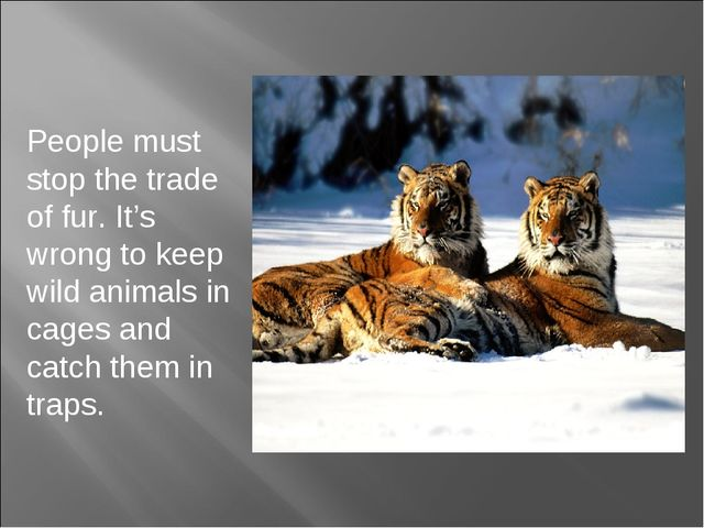 People must stop the trade of fur. It's wrong to keep wild animals in cages a...