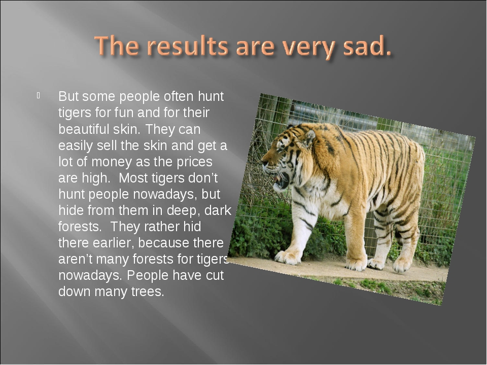 But some people often hunt tigers for fun and for their beautiful skin. They...