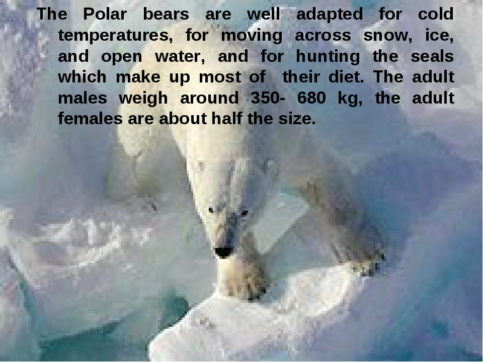 The Polar bears are well adapted for cold temperatures, for moving across sno...