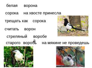 белая ворона трещать как  на хвосте принесла стреляный считать ворон сорока
