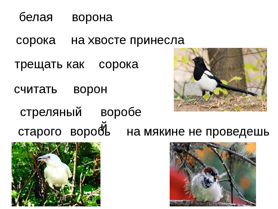 белая ворона трещать как  на хвосте принесла стреляный считать ворон сорока...
