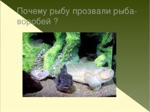 Почему рыбу прозвали рыба-воробей ?