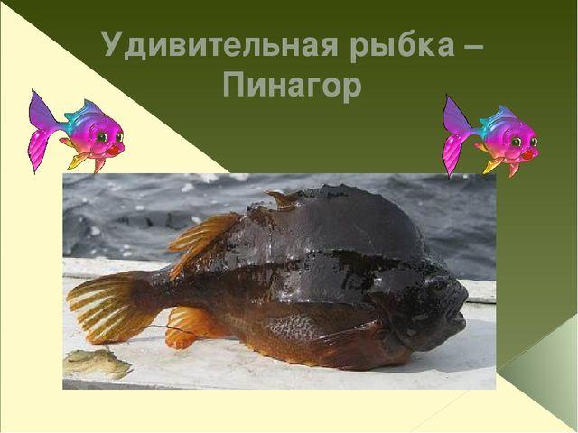 Удивительная рыбка – Пинагор