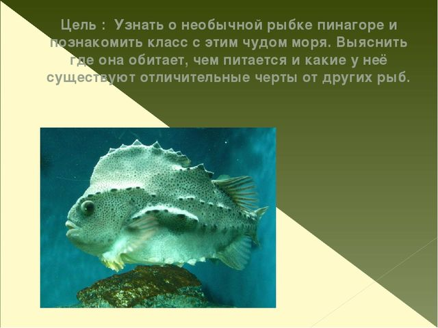 Цель : Узнать о необычной рыбке пинагоре и познакомить класс с этим чудом мор...