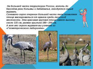 На большей части территории России, вплоть до бассейна реки Колымы и Забайка