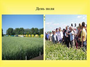 День поля 