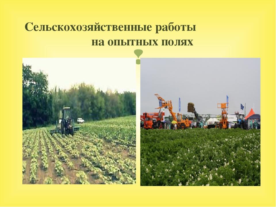 Сельскохозяйственные работы на опытных полях 