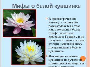 Мифы о белой кувшинке В древнегреческой легенде о кувшинке рассказывается о т