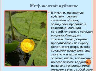 Миф желтой кубышке В Италии, где желтую кубышку считают символом обмана, заро