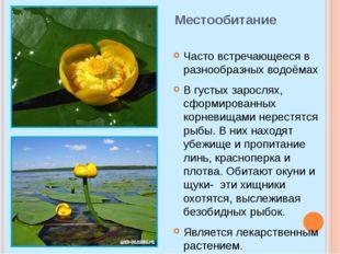 Местообитание Часто встречающееся в разнообразных водоёмах В густых зарослях,