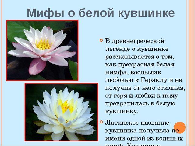 Мифы о белой кувшинке В древнегреческой легенде о кувшинке рассказывается о т...