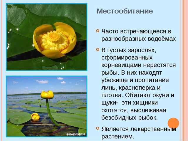 Местообитание Часто встречающееся в разнообразных водоёмах В густых зарослях,...