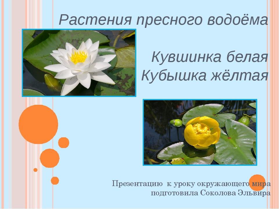Растения пресного водоёма Кувшинка белая Кубышка жёлтая Презентацию к уроку о...