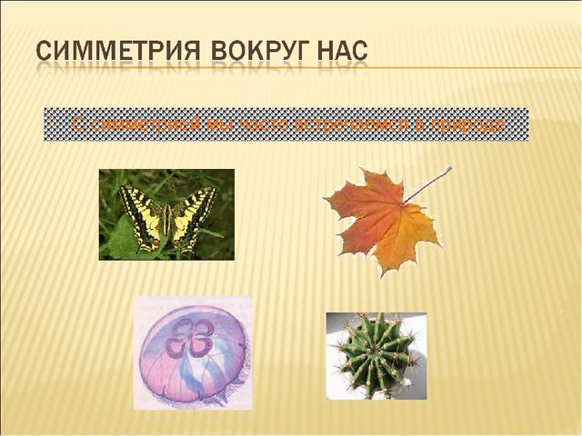 С симметрией мы часто встречаемся в природе