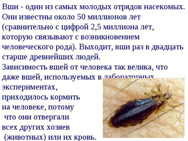 Вши - один из самых молодых отрядов насекомых. Они известны около 50 миллионо...