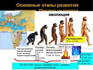 Основные этапы развития человека. Предки человека Австралопитек (южная обезья