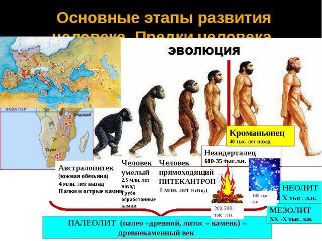 Основные этапы развития человека. Предки человека Австралопитек (южная обезья...
