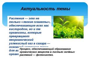 Растения — это не только «легкие планеты», обеспечивающие всех нас кислородом