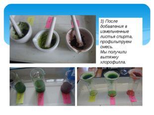 3) После добавления в измельченные листья спирта, профильтруем смесь. Мы полу