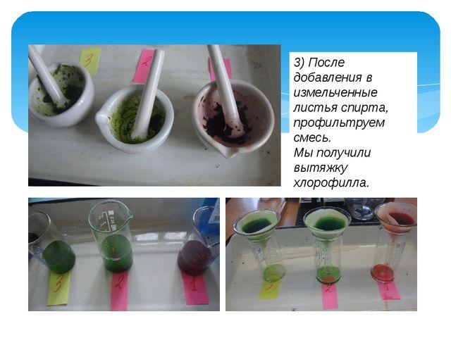 3) После добавления в измельченные листья спирта, профильтруем смесь. Мы полу...