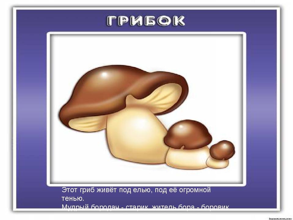 Этот гриб живёт под елью, под её огромной тенью. Мудрый бородач - старик, жи...