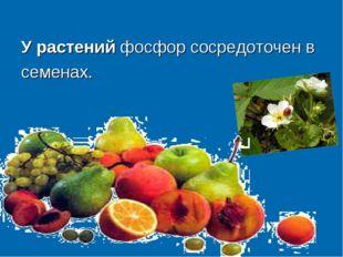 У растений фосфор сосредоточен в семенах.