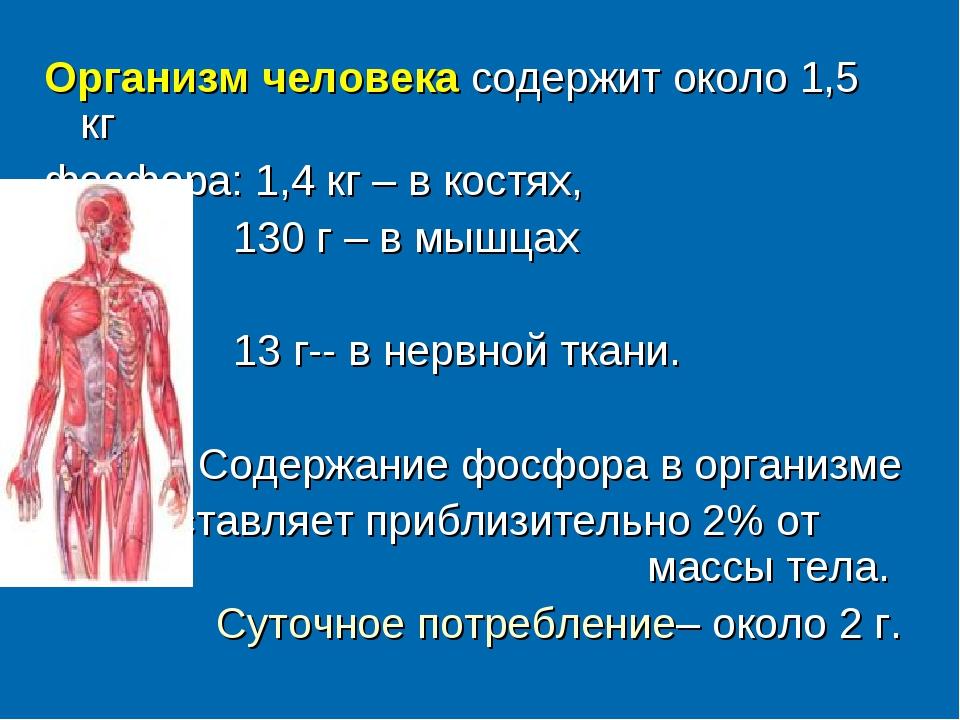 Организм человека содержит около 1,5 кг фосфора: 1,4 кг – в костях, 130 г –...