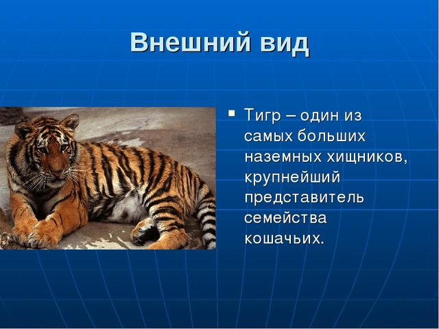 Внешний вид Тигр – один из самых больших наземных хищников, крупнейший предст...