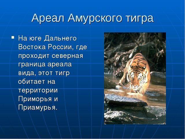 Ареал Амурского тигра На юге Дальнего Востока России, где проходит северная г...