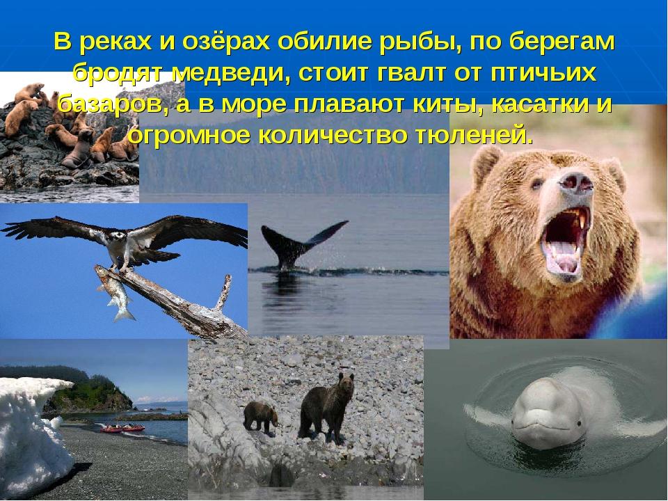 В реках и озёрах обилие рыбы, по берегам бродят медведи, стоит гвалт от птичь...
