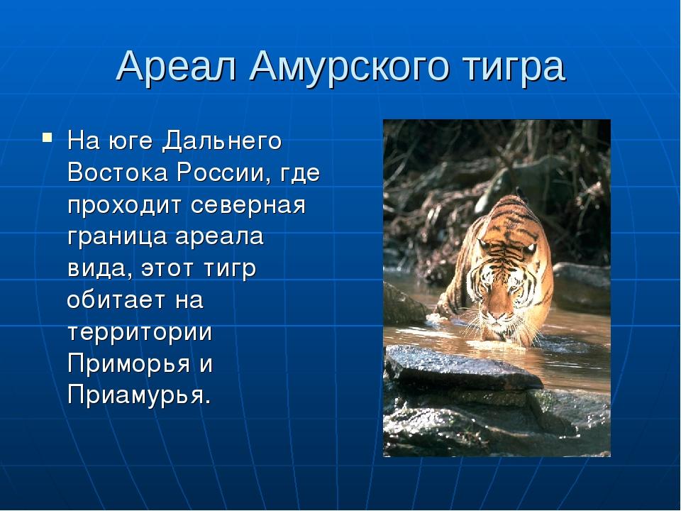 Где в россии водятся тигры