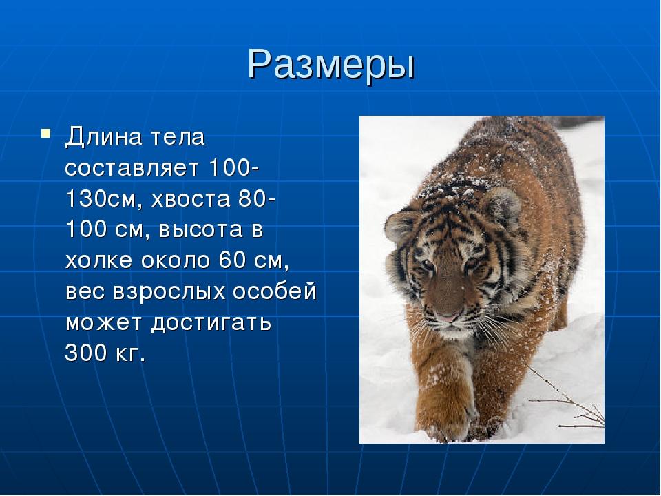 Размеры Длина тела составляет 100-130см, хвоста 80-100 см, высота в холке око...