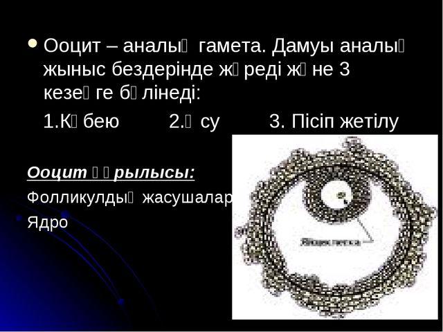 Ооцит – аналық гамета. Дамуы аналық жыныс бездерінде жүреді және 3 кезеңге бө...