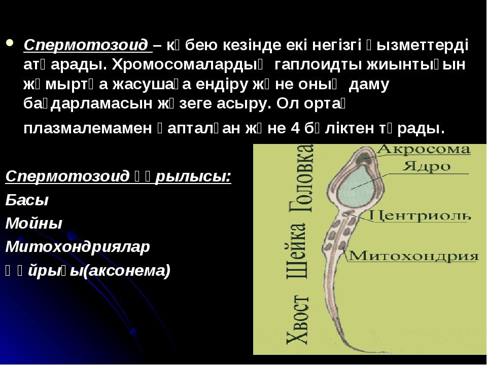 Спермотозоид – көбею кезінде екі негізгі қызметтерді атқарады. Хромосомаларды...