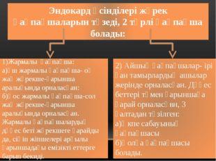 Эндокард өсінділері жүрек қақпақшаларын түзеді, 2 түрлі қақпақша болады: 1)Жа