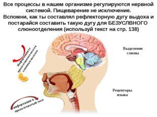 Все процессы в нашем организме регулируются нервной системой. Пищеварение не