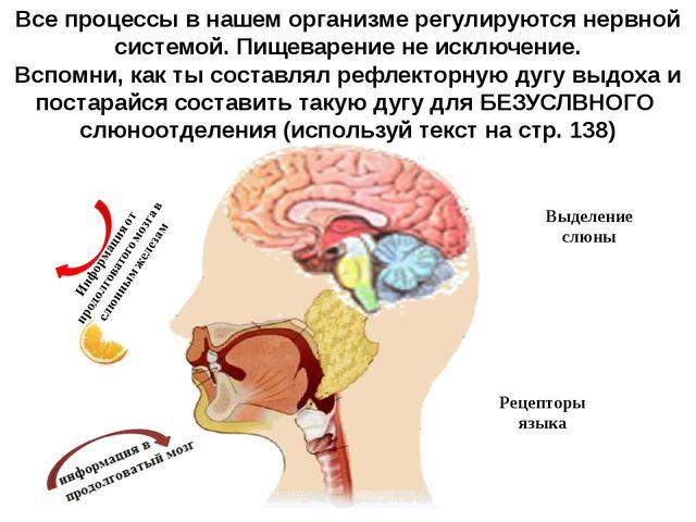 Все процессы в нашем организме регулируются нервной системой. Пищеварение не...