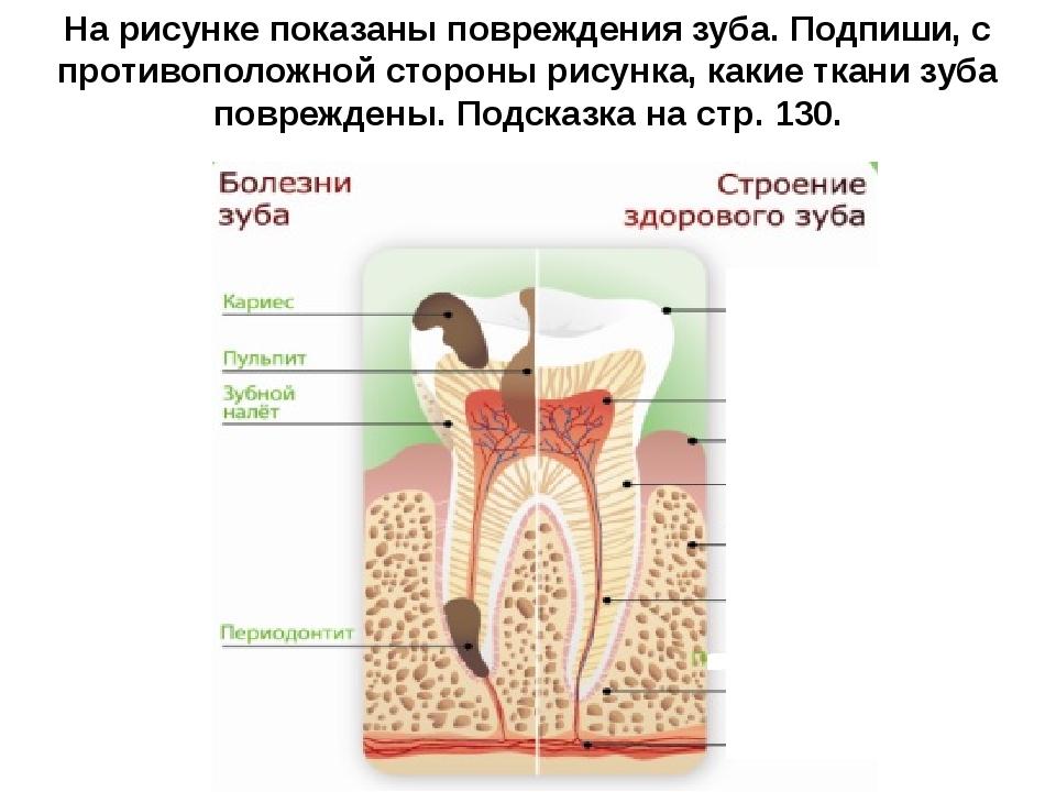 Все о строении и лечении зубов