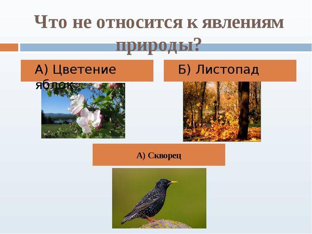 Что не относится к явлениям природы? А) Цветение яблок Б) Листопад А) Скворец