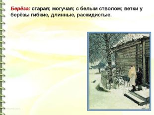 Берёза: старая; могучая; с белым стволом; ветки у берёзы гибкие, длинные, рас