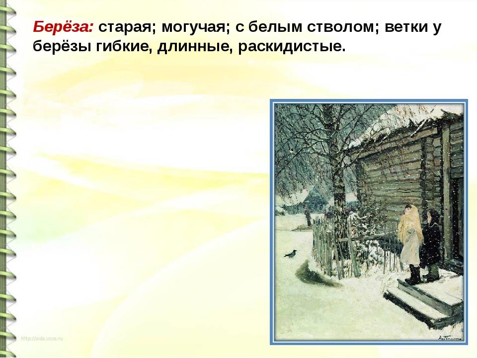 Берёза: старая; могучая; с белым стволом; ветки у берёзы гибкие, длинные, рас...