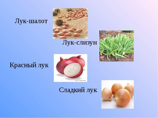 Лук-шалот Лук-слизун Красный лук Сладкий лук