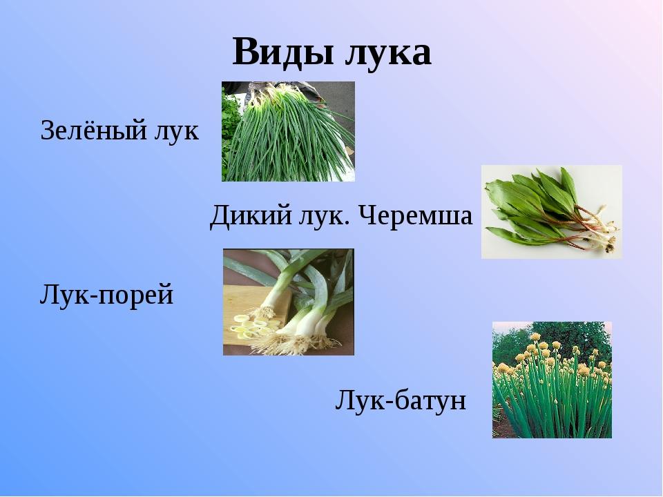 Фото разновидностей лука с названиями