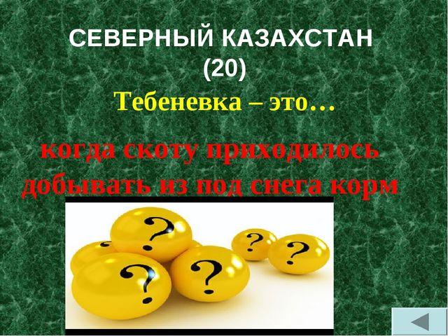 СЕВЕРНЫЙ КАЗАХСТАН (20) Тебеневка – это… когда скоту приходилось добывать из...