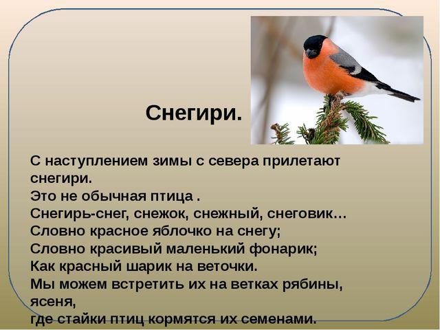 Снегири. С наступлением зимы с севера прилетают снегири. Это не обычная птиц...