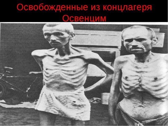 Освобожденные из концлагеря Освенцим