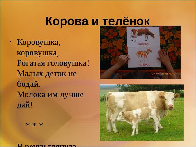 Корова и телёнок Коровушка, коровушка, Рогатая головушка! Малых деток не бода...