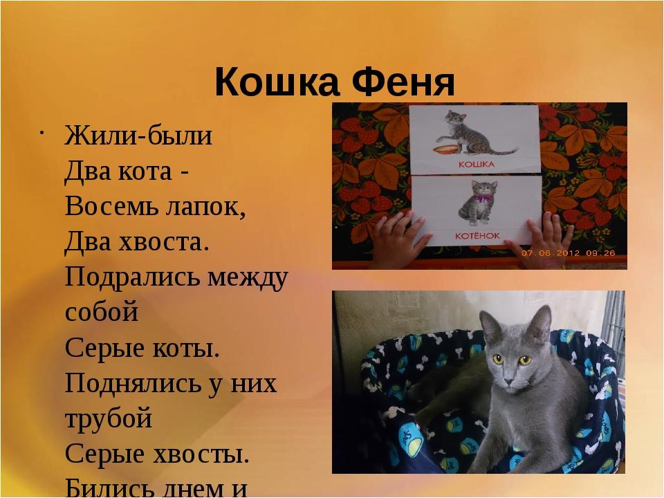 Кошка Феня Жили-были Два кота - Восемь лапок, Два хвоста. Подрались между...